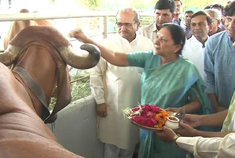 cow cm 1