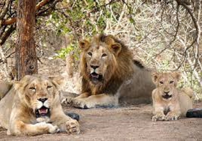gujarat lions to UP