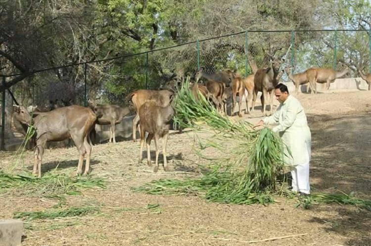 Vijay Rupani feeds animal on Environment Day