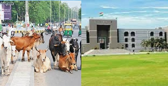 high court stray cattle