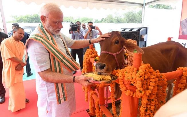 modi feeds cow