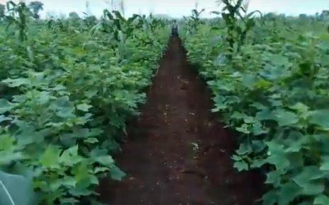 farm in gujarat