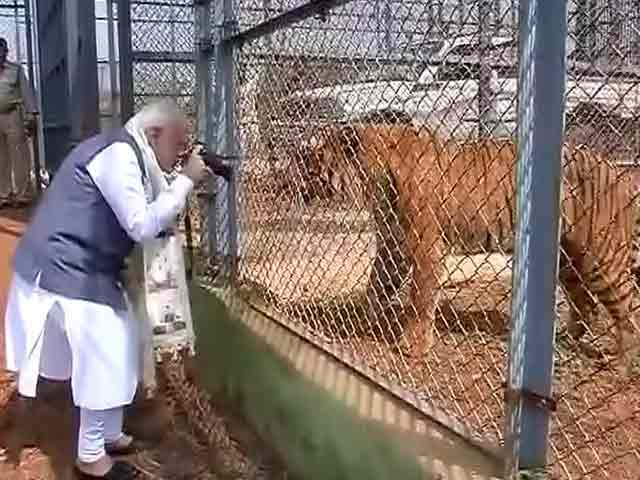 modi jungle safari park