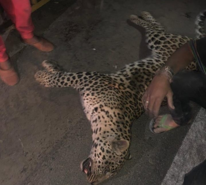 leopard in ahmedabad