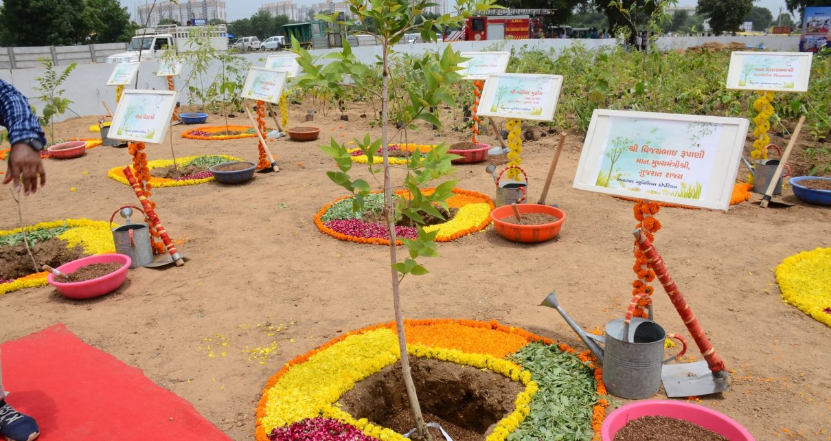 plantation by cm rupani